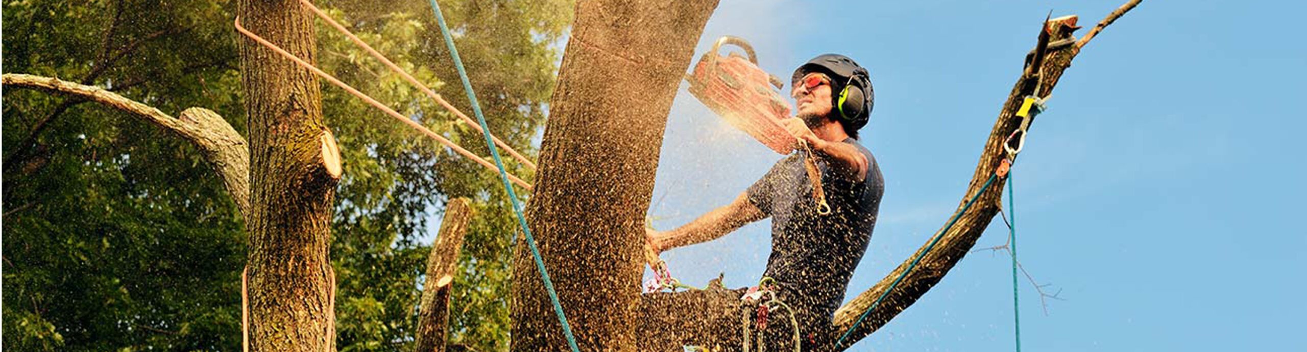 What Does A Tree Service Technician Do?