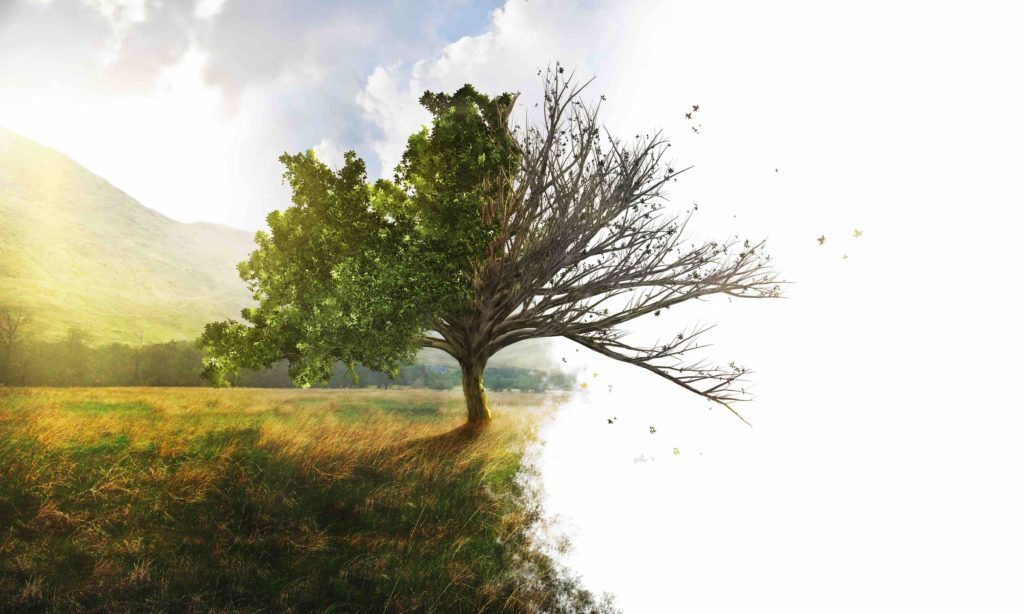 Are Your Trees Healthy? 3 Signs to Watch Out For