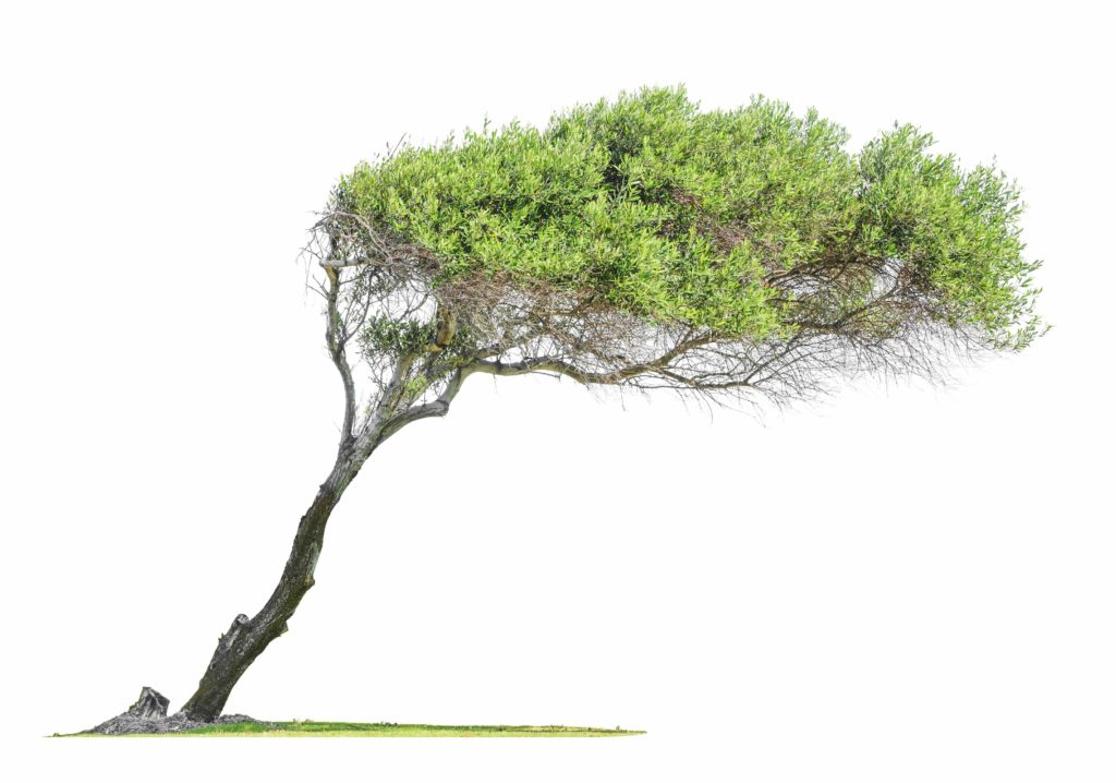 How to Make Leaning Trees Straight?
