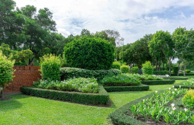 What Does Tree Maintenance Include in Fort Worth